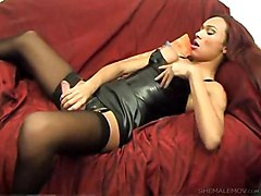 tranny shemale trans transexual tgirl transvestite