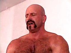 Bear Wrestling Orgy