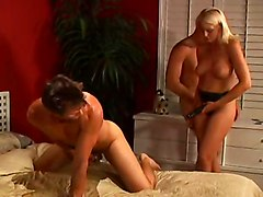 Group Sex Sex Toys Bisexuals
